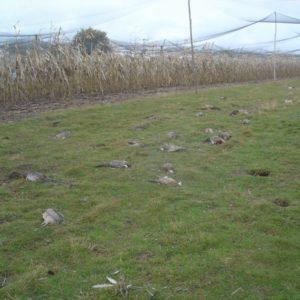Dégâts sur élevage de faisans