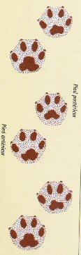 Empreintes du chien vivérrin